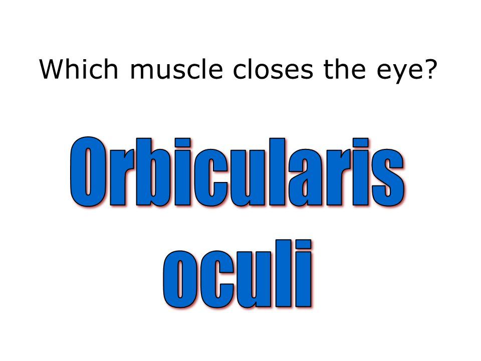 Which muscle closes the eye