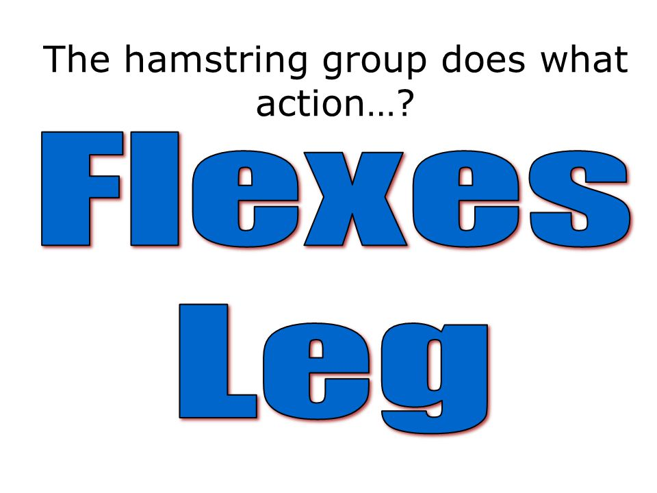 The hamstring group does what action…