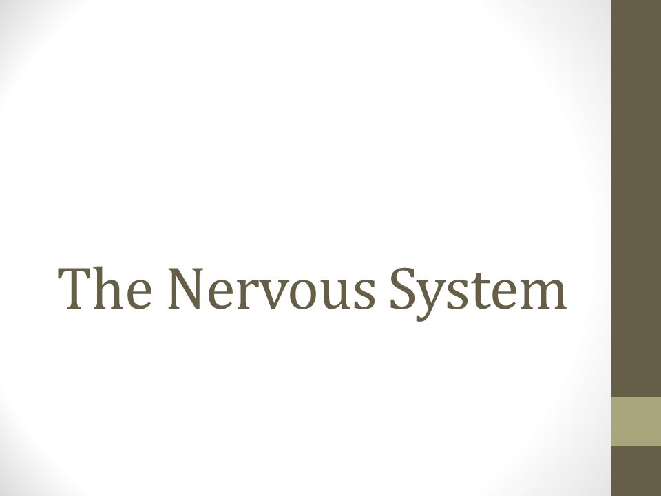 The Peripheral System 1.Broken into two parts a.