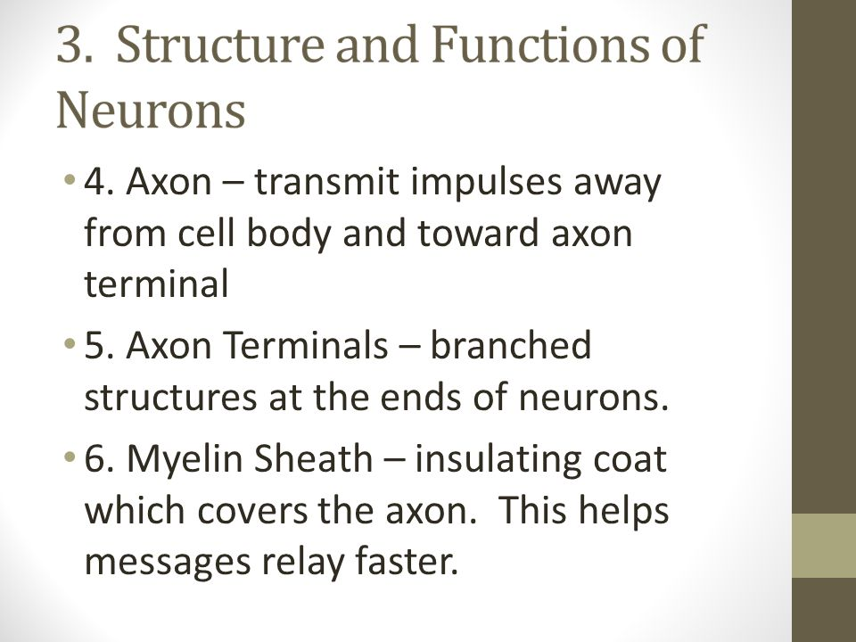 4. Axon – transmit impulses away from cell body and toward axon terminal 5. Axon Terminals – branched structures at the ends of neurons. 6. Myelin She