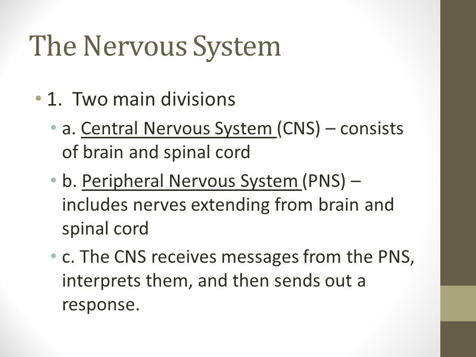 The Nervous System 1. Two main divisions a. Central Nervous System (CNS) – consists of brain and spinal cord b. Peripheral Nervous System (PNS) – incl
