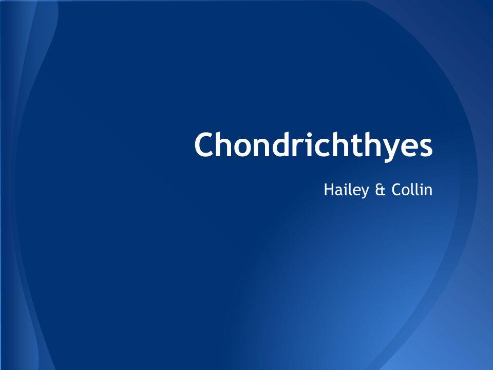 Chondrichthyes Hailey & Collin