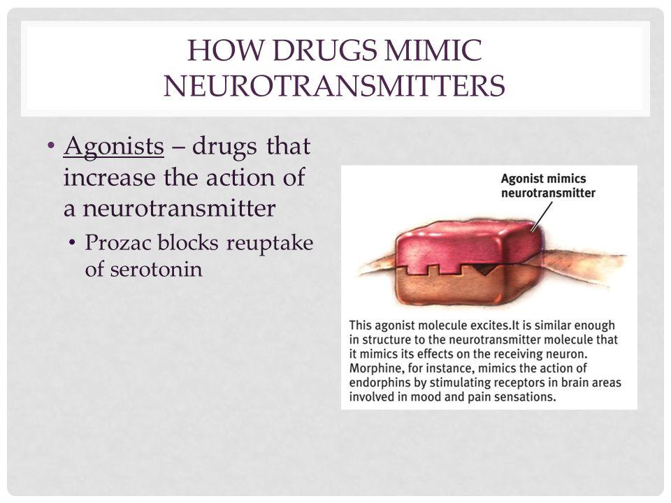 HOW DRUGS MIMIC NEUROTRANSMITTERS Agonists – drugs that increase the action of a neurotransmitter Prozac blocks reuptake of serotonin