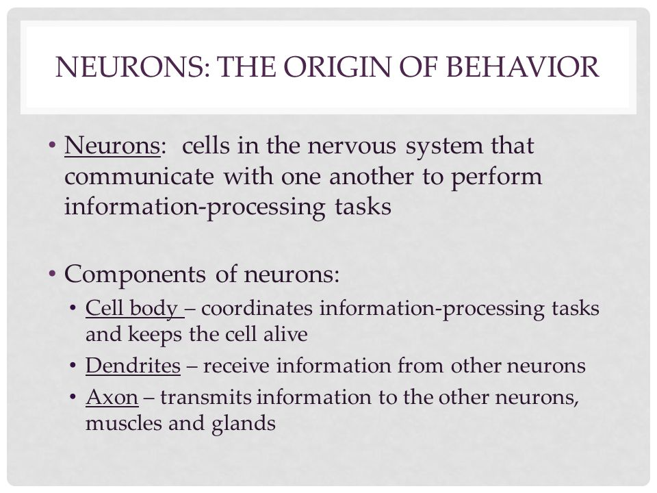 NEURONS: THE ORIGIN OF BEHAVIOR Neurons: cells in the nervous system that communicate with one another to perform information-processing tasks Compone