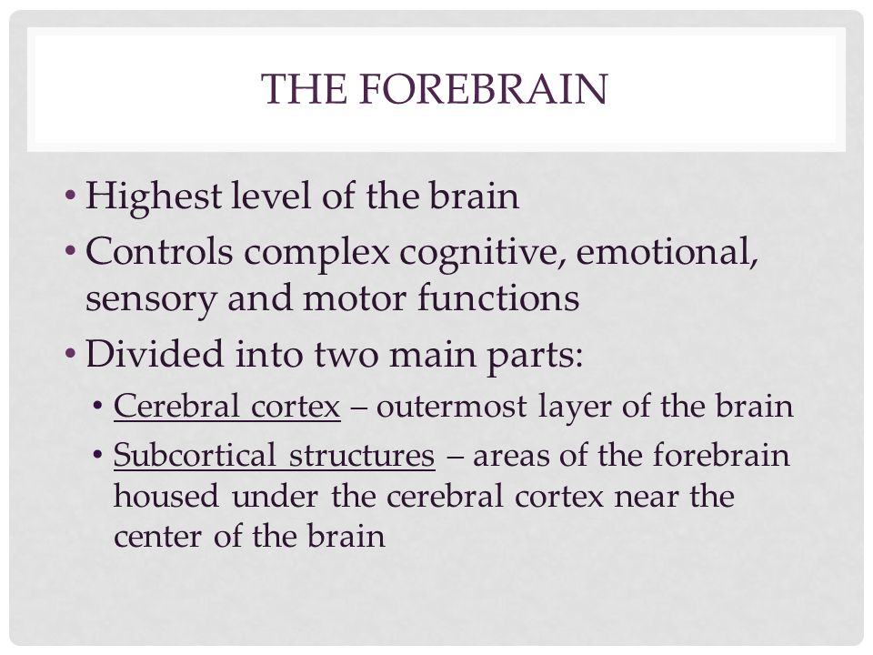 THE FOREBRAIN Highest level of the brain Controls complex cognitive, emotional, sensory and motor functions Divided into two main parts: Cerebral cort