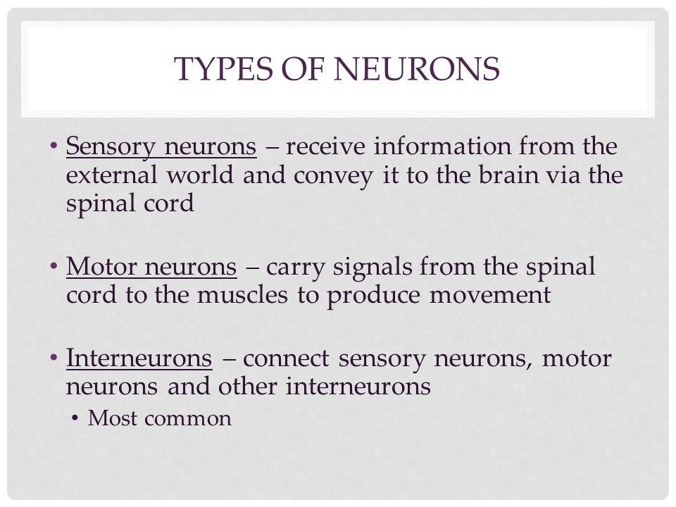 TYPES OF NEURONS Sensory neurons – receive information from the external world and convey it to the brain via the spinal cord Motor neurons – carry si