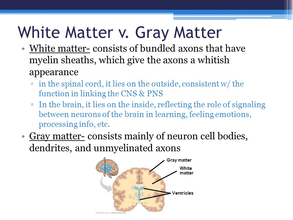White Matter v. Gray Matter White matter- consists of bundled axons that have myelin sheaths, which give the axons a whitish appearance ▫in the spinal