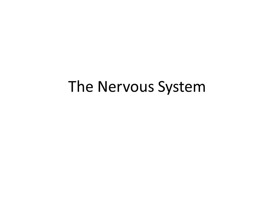 Neurons The messages carried by the nervous system are called impulses.