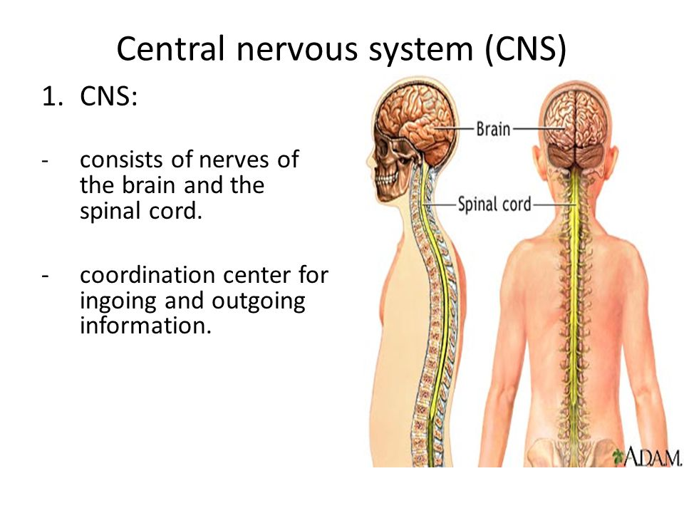 - covered by three protective membranes.These membranes are called the meninges.