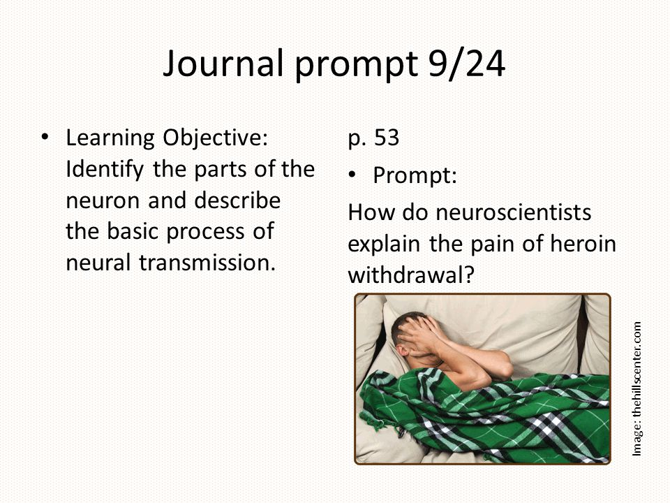 Journal prompt 9/24 Learning Objective: Identify the parts of the neuron and describe the basic process of neural transmission. p. 53 Prompt: How do n