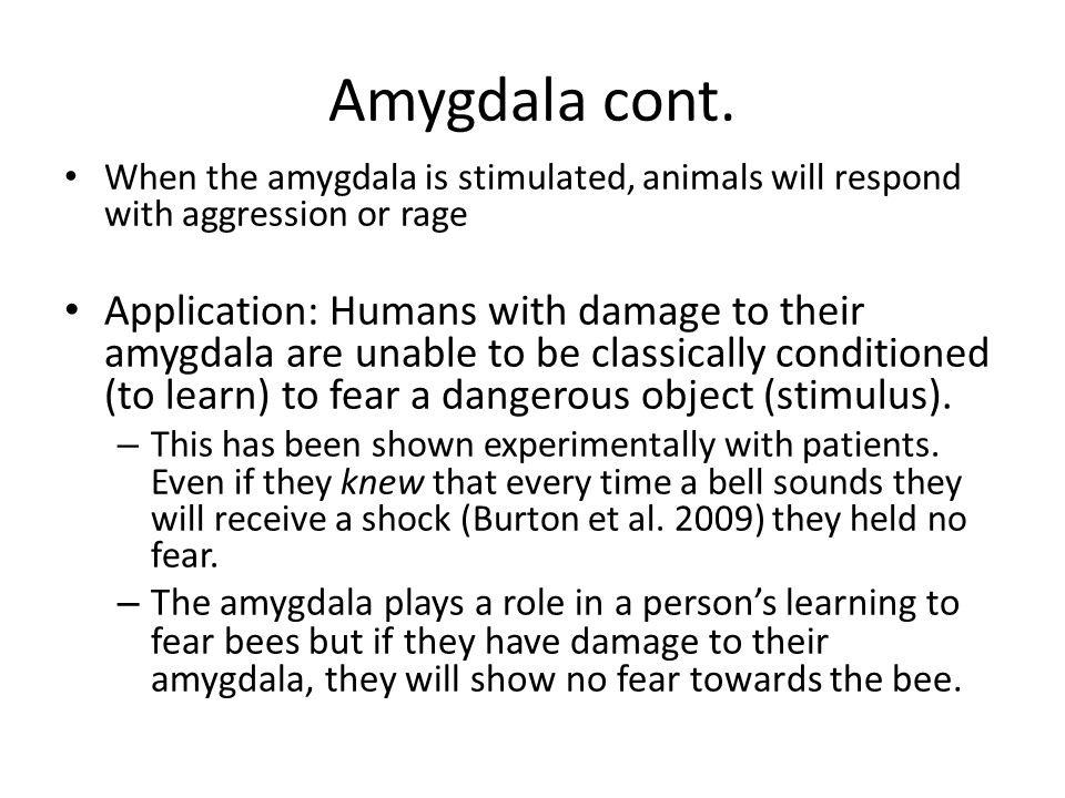 Amygdala cont. When the amygdala is stimulated, animals will respond with aggression or rage Application: Humans with damage to their amygdala are una