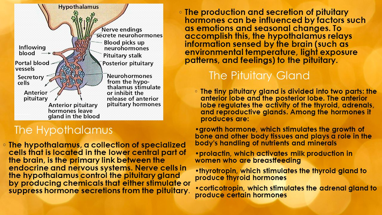 Evolutionary Development  Most animals with well-developed nervous and circulatory systems have an endocrine system.
