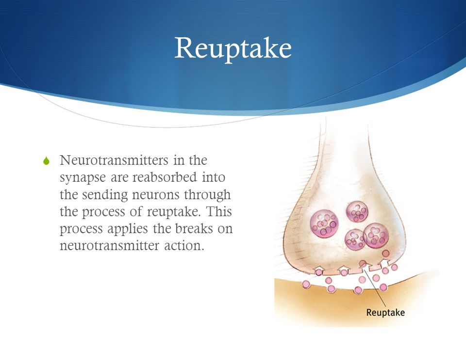 Reuptake  Neurotransmitters in the synapse are reabsorbed into the sending neurons through the process of reuptake.