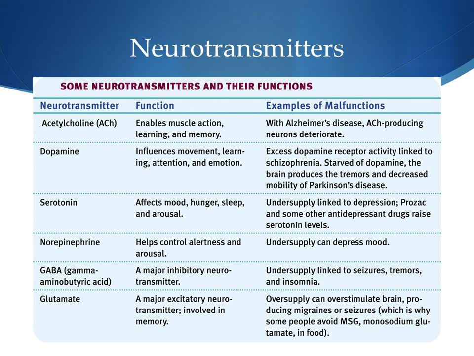 13 Neurotransmitters