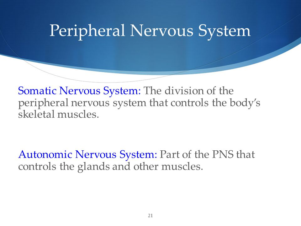 21 Peripheral Nervous System Somatic Nervous System: The division of the peripheral nervous system that controls the body's skeletal muscles.