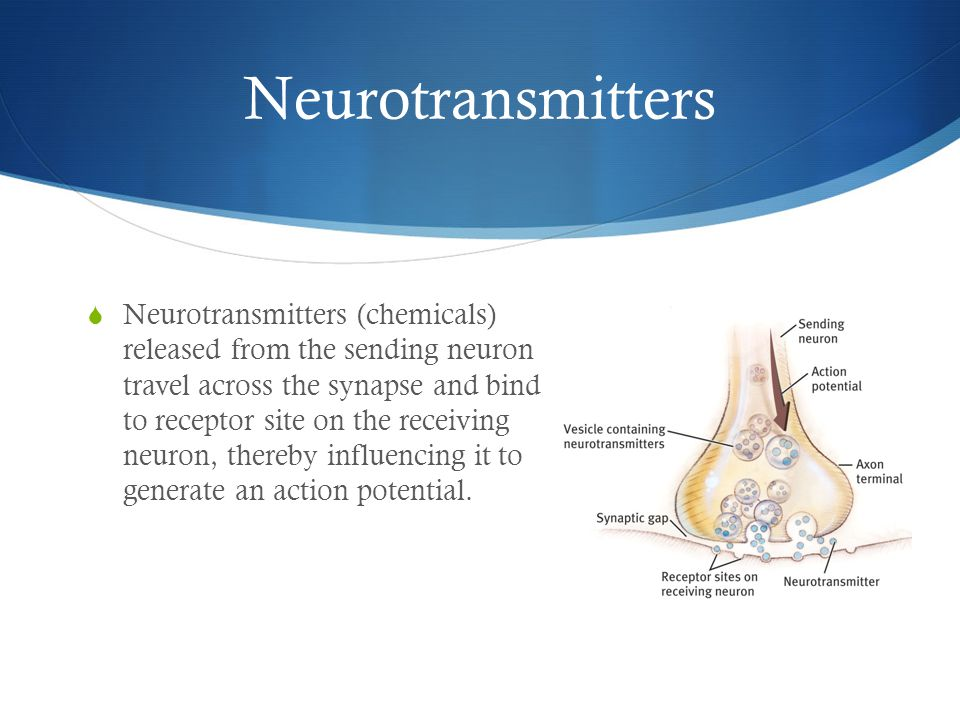 Neurotransmitters  Neurotransmitters (chemicals) released from the sending neuron travel across the synapse and bind to receptor site on the receiving neuron, thereby influencing it to generate an action potential.