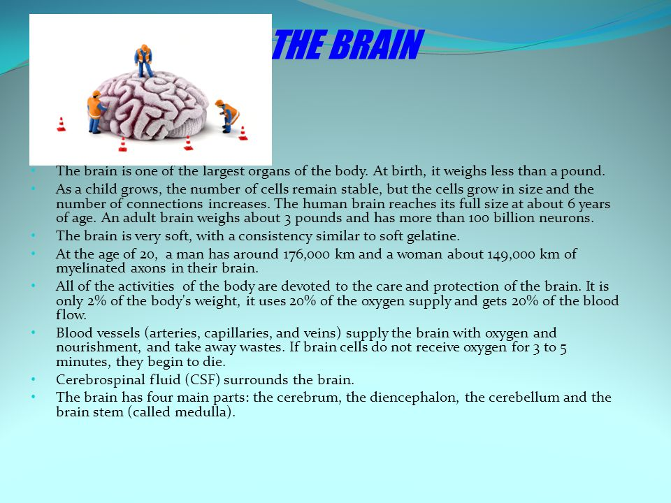 THE BRAIN The brain is one of the largest organs of the body.