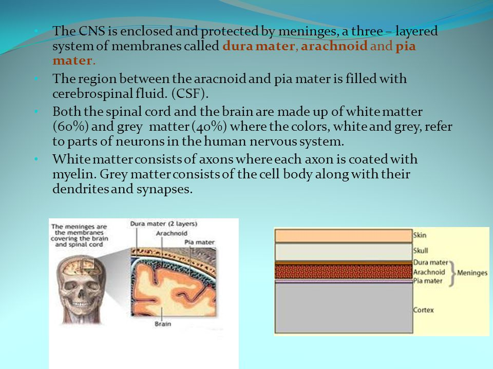 The CNS is enclosed and protected by meninges, a three – layered system of membranes called dura mater, arachnoid and pia mater. The region between th