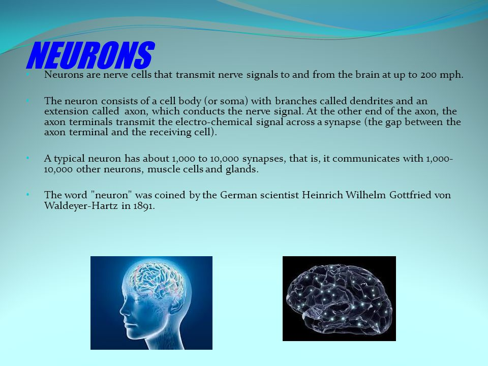 NEURONS Neurons are nerve cells that transmit nerve signals to and from the brain at up to 200 mph.