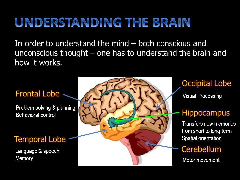In order to understand the mind – both conscious and unconscious thought – one has to understand the brain and how it works.