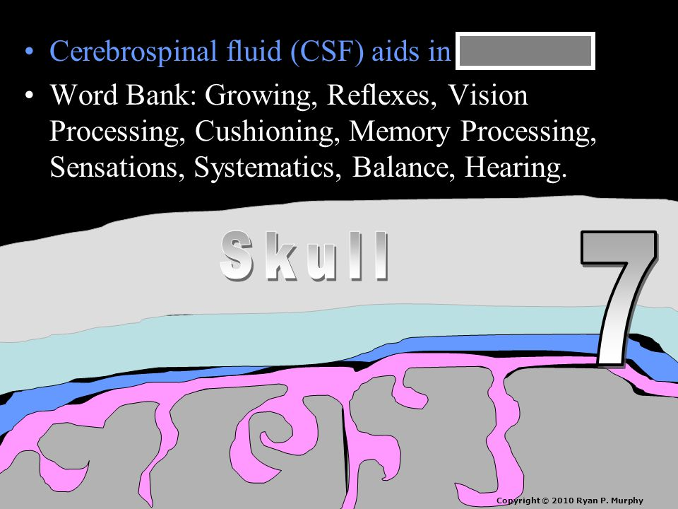 Cerebrospinal fluid (CSF) aids in cushioning.