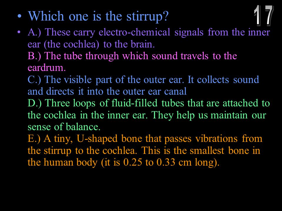 Which one is the stirrup? A.) These carry electro-chemical signals from the inner ear (the cochlea) to the brain. B.) The tube through which sound tra