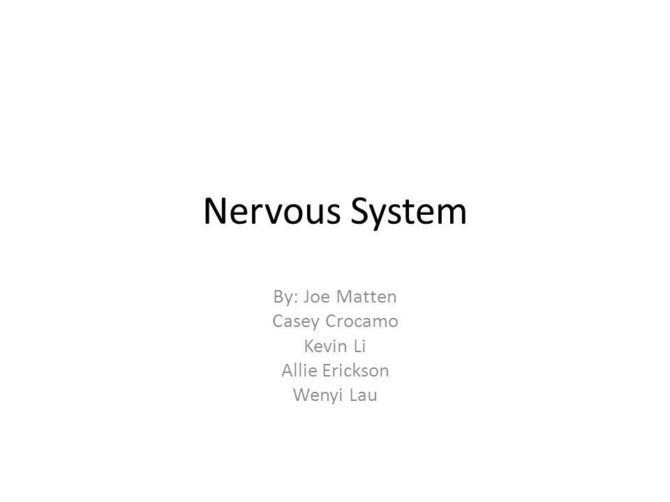 Nervous System By: Joe Matten Casey Crocamo Kevin Li Allie Erickson Wenyi Lau
