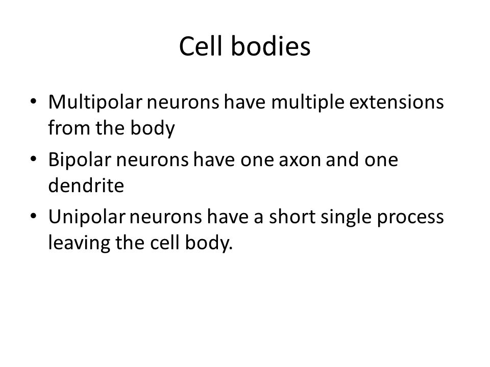 Cell bodies Multipolar neurons have multiple extensions from the body Bipolar neurons have one axon and one dendrite Unipolar neurons have a short single process leaving the cell body.