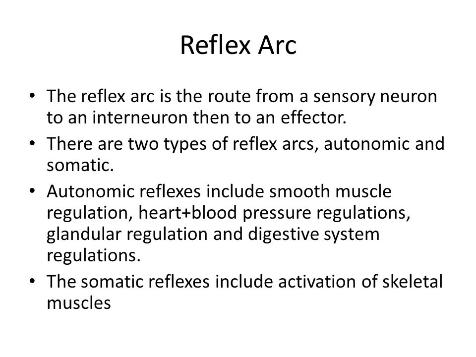 Reflex Arc The reflex arc is the route from a sensory neuron to an interneuron then to an effector.