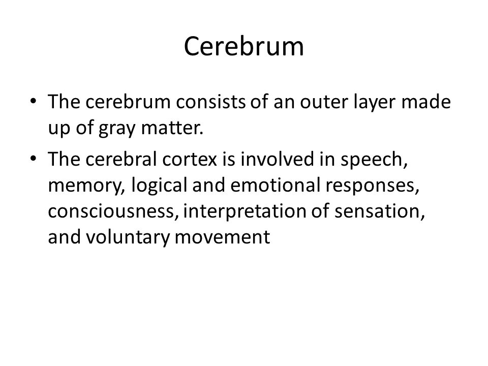 Cerebrum The cerebrum consists of an outer layer made up of gray matter.