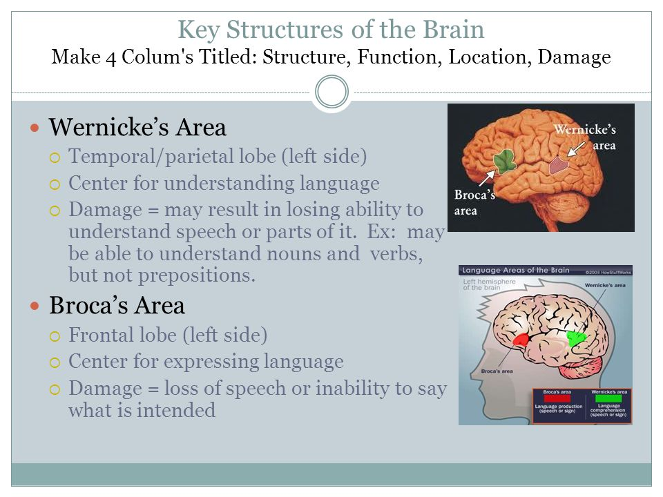 Key Structures of the Brain Make 4 Colum s Titled: Structure, Function, Location, Damage Wernicke's Area  Temporal/parietal lobe (left side)  Center for understanding language  Damage = may result in losing ability to understand speech or parts of it.