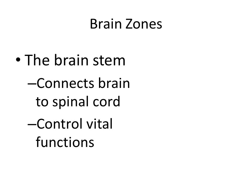 Brain Zones The brain stem – Connects brain to spinal cord – Control vital functions