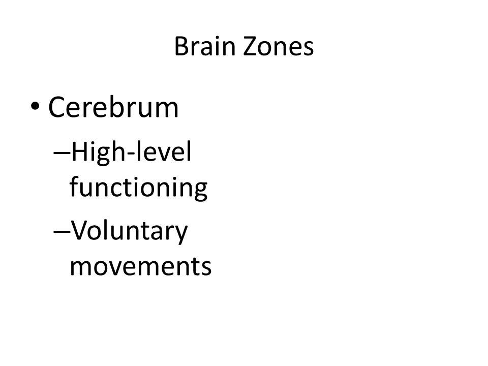 Brain Zones Cerebrum – High-level functioning – Voluntary movements