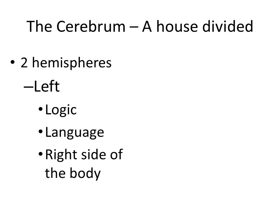 The Cerebrum – A house divided 2 hemispheres – Left Logic Language Right side of the body