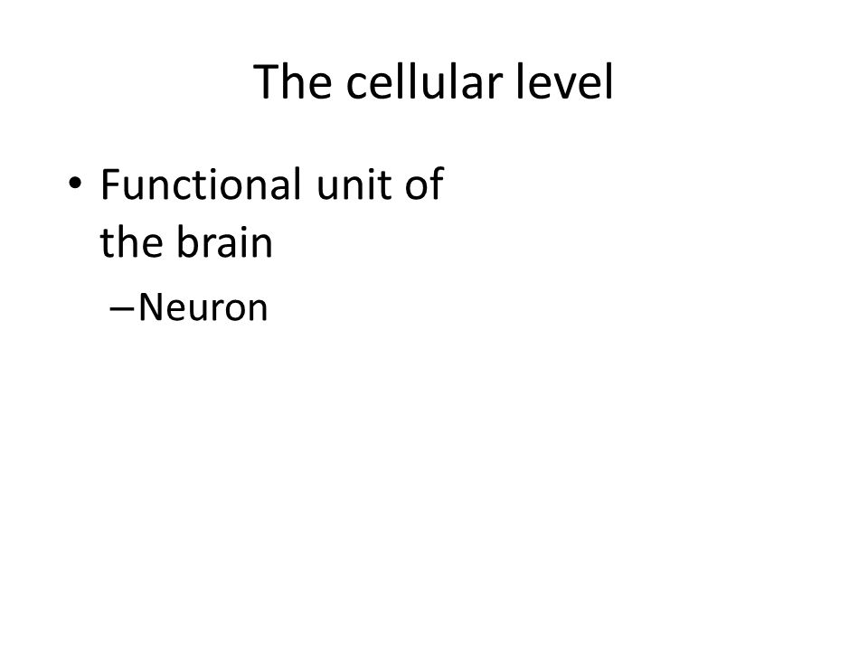 The cellular level Functional unit of the brain – Neuron