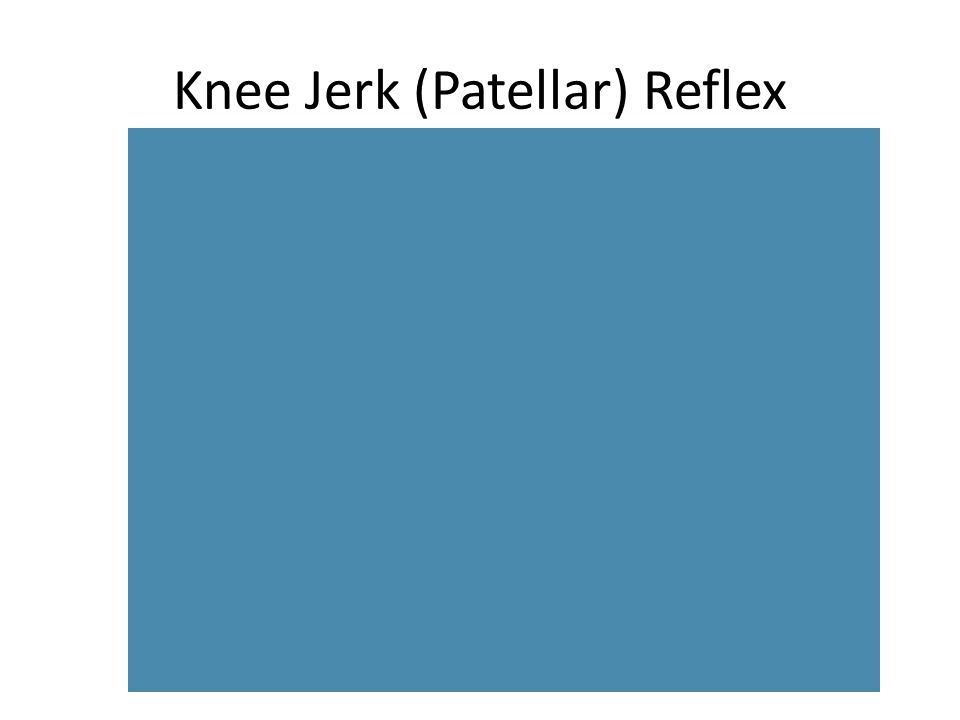 Knee Jerk or (DTR) reflex The reflex that the doctor checks by tapping your knee is called the patellar, or knee-jerk, reflex.