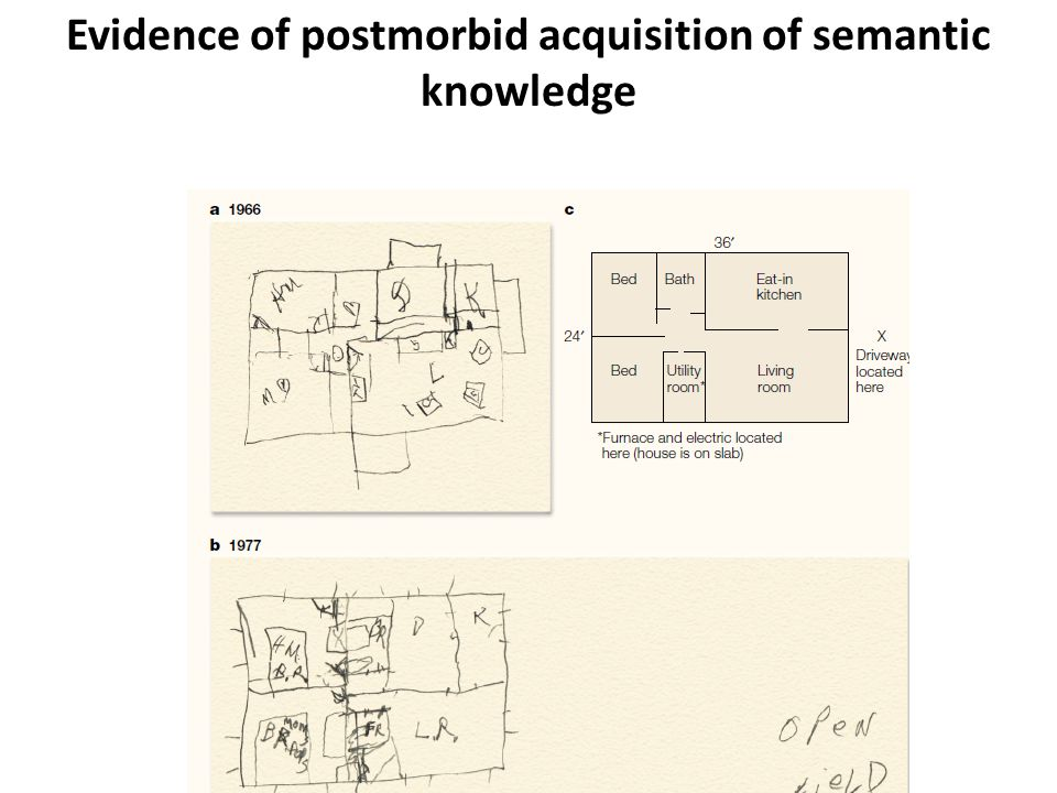 Evidence of postmorbid acquisition of semantic knowledge