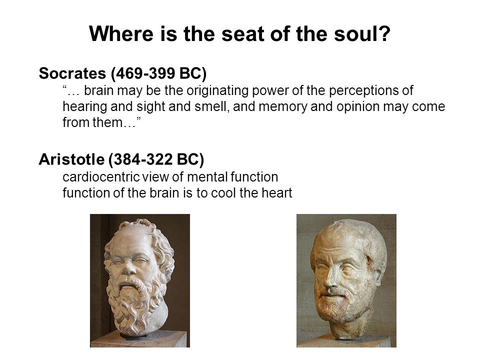 "Where is the seat of the soul? Socrates (469-399 BC) ""… brain may be the originating power of the perceptions of hearing and sight and smell, and memo"