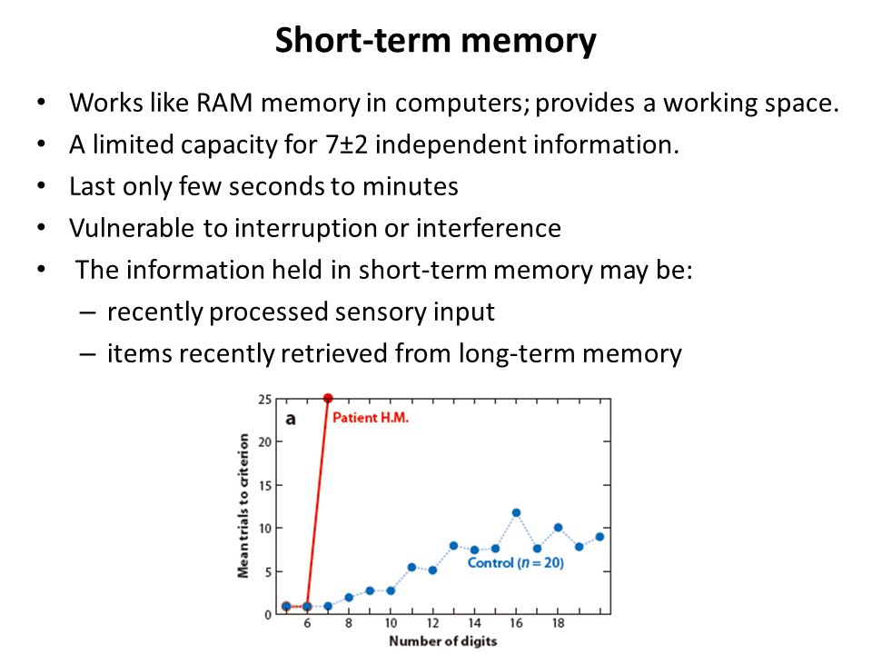 Short-term memory Works like RAM memory in computers; provides a working space.