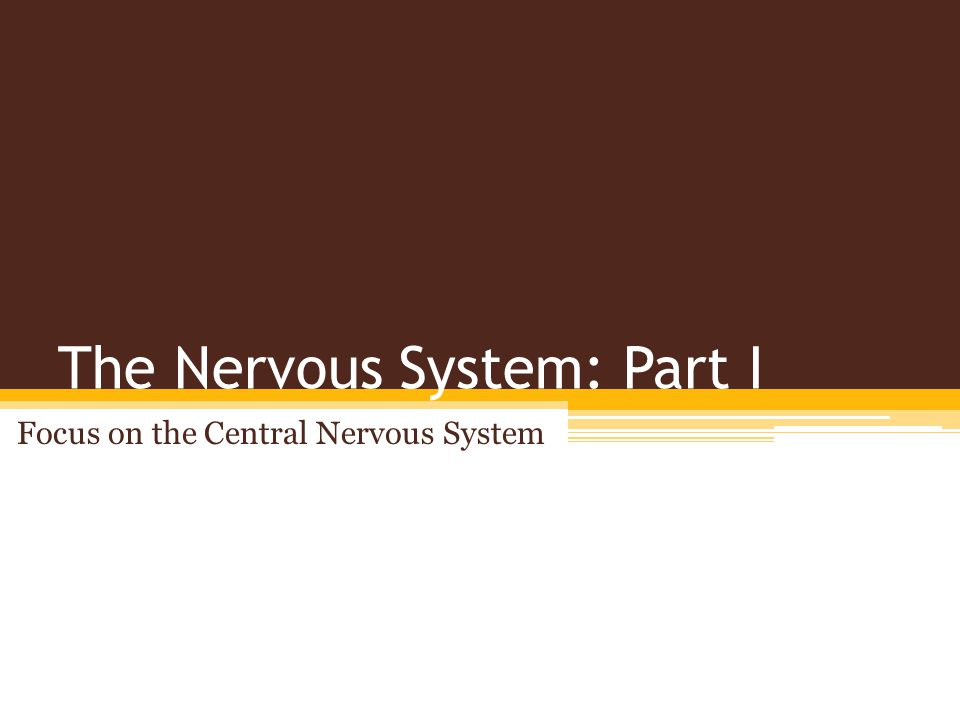 The Nervous System: Part I Focus on the Central Nervous System
