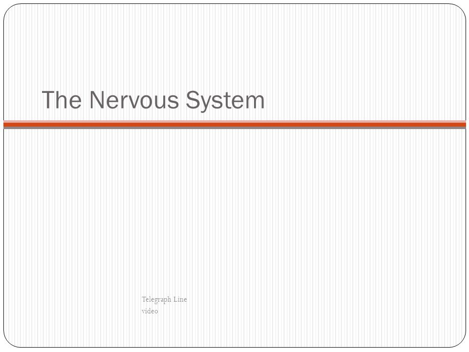 The Nervous System Telegraph Line video