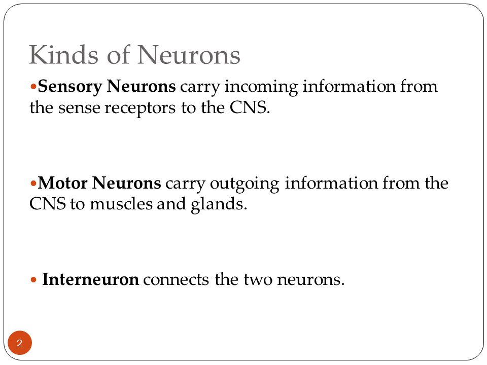 Kinds of Neurons 2 Sensory Neurons carry incoming information from the sense receptors to the CNS.