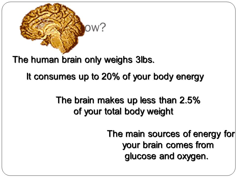 Did you know.The human brain only weighs 3lbs.
