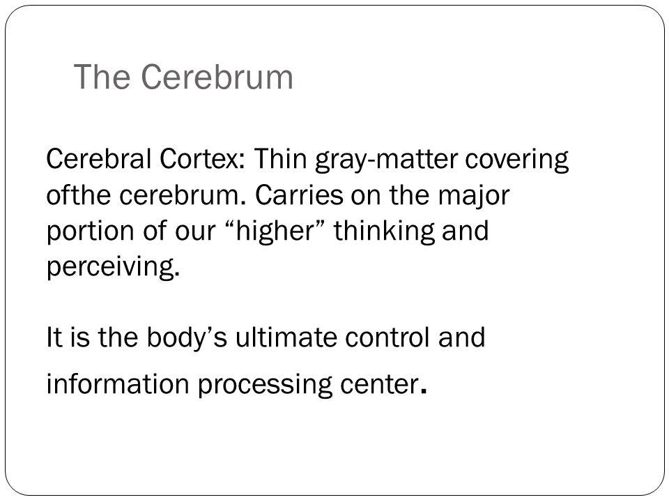 The Cerebrum Cerebral Cortex: Thin gray-matter covering ofthe cerebrum.