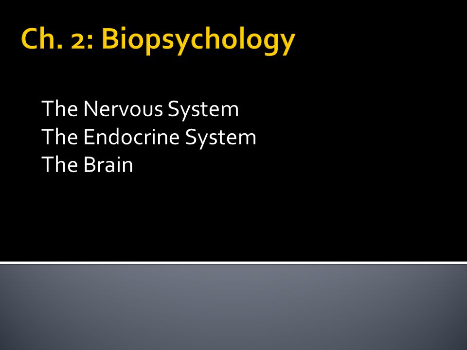The Nervous System The Endocrine System The Brain