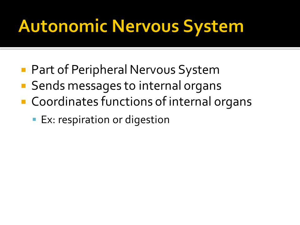  Part of Peripheral Nervous System  Sends messages to internal organs  Coordinates functions of internal organs  Ex: respiration or digestion