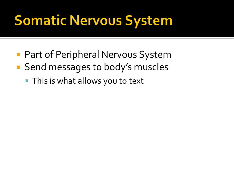  Part of Peripheral Nervous System  Send messages to body's muscles  This is what allows you to text