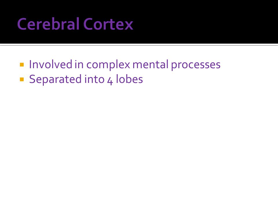  Involved in complex mental processes  Separated into 4 lobes
