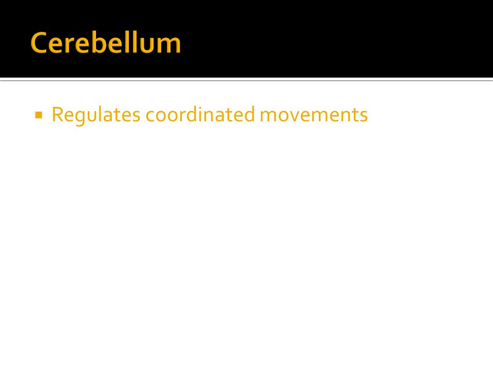  Regulates coordinated movements