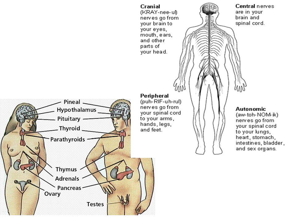  Sets brains alertness level and warning system